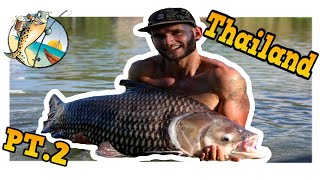 FISHING IN THAILAND PT.2 ***** Catching massive siamese carp and Red tale catfish *****