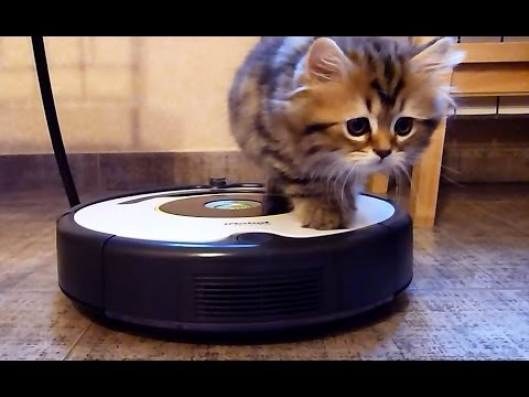 Funny Cat Videos Roomba