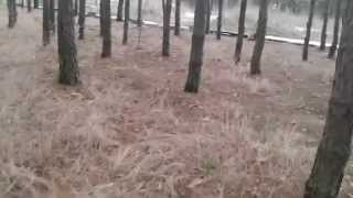 Walking With The Dogs (welsh Corgi Pembroke And Aussie)
