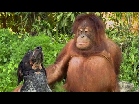 Cute Animals Being Friends In New Android Ad What S