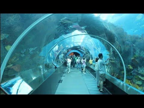 SEA Aquarium Singapore 2019 , Resorts World Sentosa
