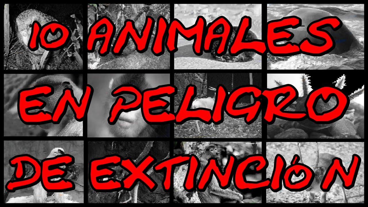 10 ANIMALES EN PELIGRO DE EXTINCIÓN - 2015 - YouTube