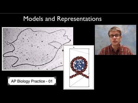 AP Biology Science Practice 1: Models and Representations
