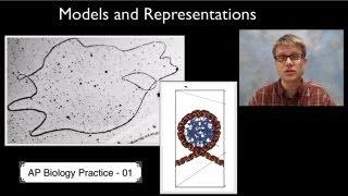 AP-Biologie-Wissenschaft-Praxis 1: Modelle und Darstellungen