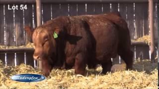 Soderglen Ranch 2015 Select Lot 54 Red Simmental