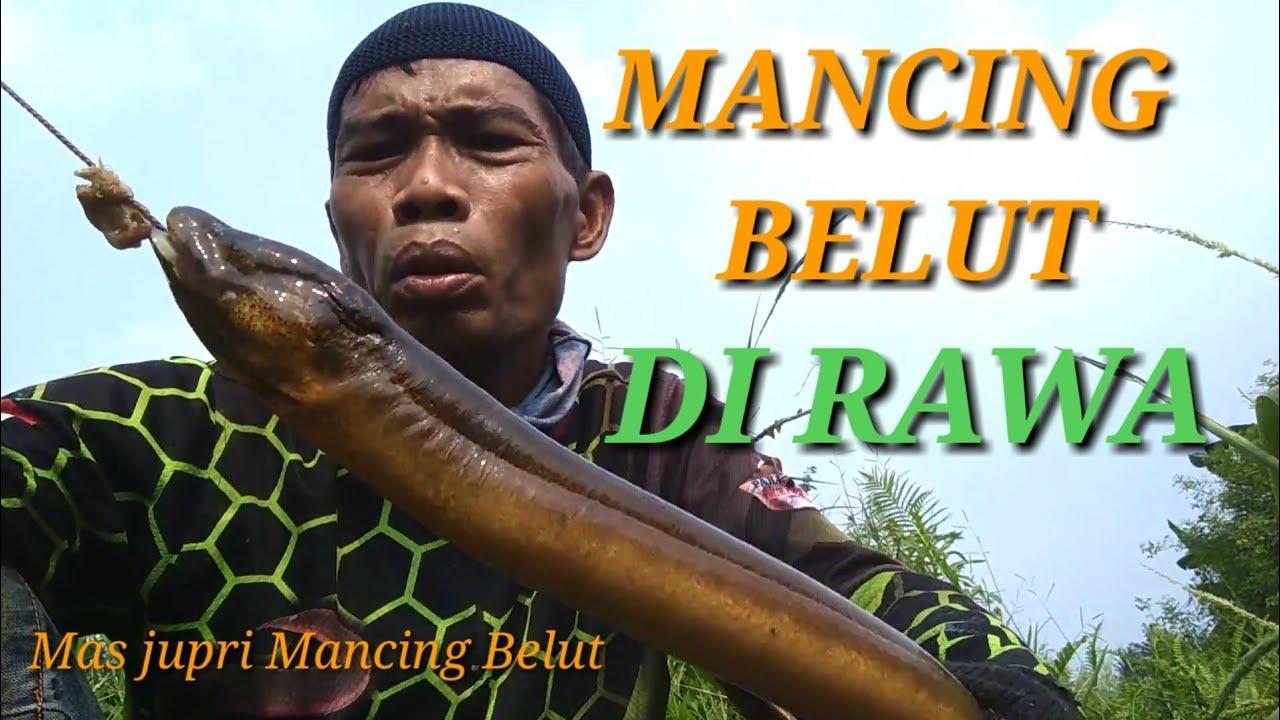 MANCING BELUT di Spot RAWA RAWA - YouTube