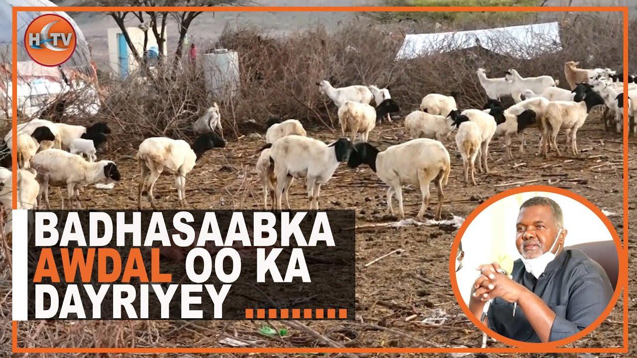 Download Boorama: Xaalado Bini Aadanimo oo ka Jira Deegaano Hoos yimaada Gobolka Awdal.