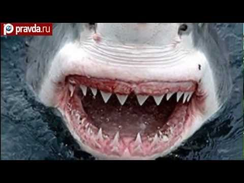 Sharks invade Russian waters