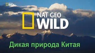 Nat Geo Wild: Дикая природа Китая. Царство дикой природы Тибета / China's wild side