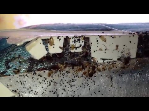 BBB Extermination Services - Top Ten Bed Bug Myths