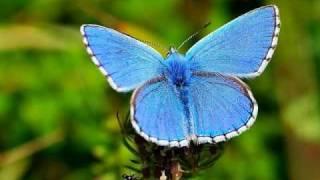 vlindertje.avi