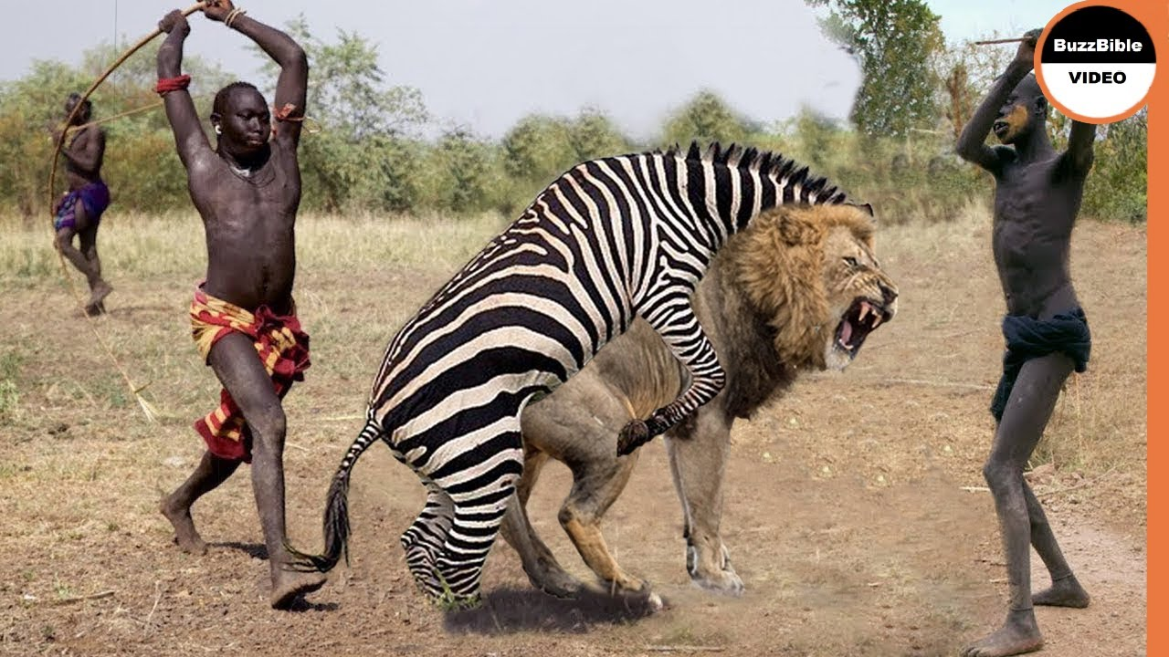 A Mother Zebra Kick Can Break a Lion's Jaw To Save Her Foal