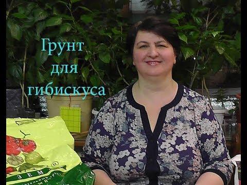 Как составить грунт для Гибискусов? -видео Ольги Пряниковой