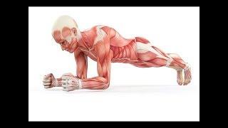 Questo Accade se Fate Plank Ogni Giorno - 5 Buoni Motivi per Fare Plank Ogni Giorno