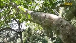 Andreina en las tirolinas del Parque Nacional El Avila