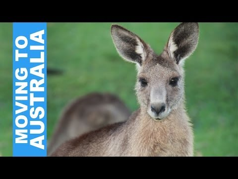 A YEAR IN AUSTRALIA (On a Working Holiday Visa and a Small Budget)