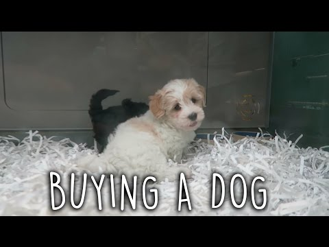 BUYING A NEW DOG?!
