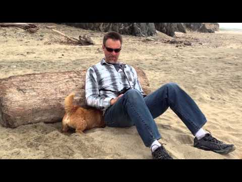 Norwich Terrier digging sand at Kehoe Beach #2 of 3