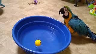 Большой попугай и тазик с водой часть 2