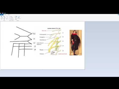 Lumbar Plexus Memory Trick
