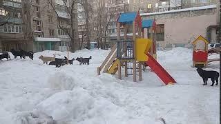 Собаки пугают прохожих на детской площадке в Саратове