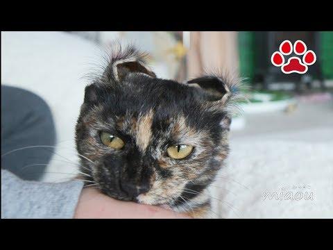 これなら手術はうけられる。子猫らな【瀬戸のらな日記】I'm ready! Cute kitten Lana