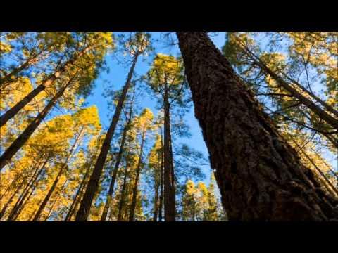 Wonderful Relaxing Music & Beautiful Nature : The Mountain