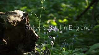 Explore Rikkyo School, close to proposed development, site of the former Mansion House Pallinghurst