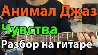 Скачать Анимал Джаз Чувства Разбор на гитаре