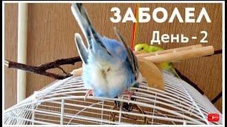 Лечу попугая || День - 2 || Тоша рыгал || Тоша не может есть корм || Болезни попугев