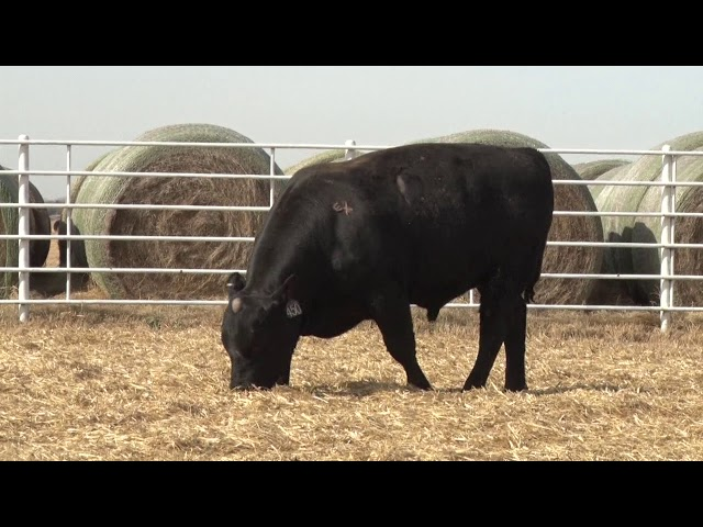 Express Ranches Lot 450