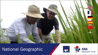 How can we solve world hunger with rice? | Ep#6 | AXA Research Fund