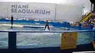 Miami Seaquarium show