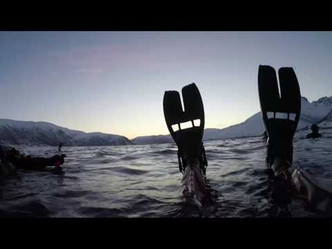 Orca Expedition - Tromsø, Norway January 2017