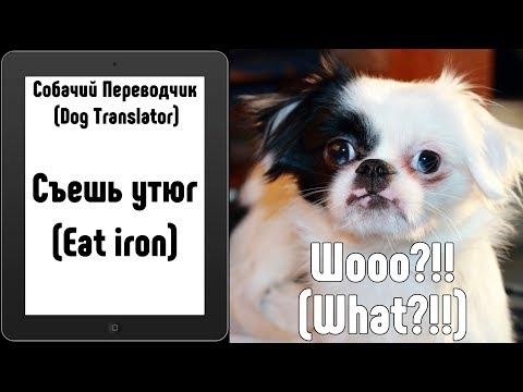 Собачий Переводчик (Dog Translator) - проверяем на собаке