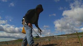 Agricultores indocumentados de Pasco, Washington