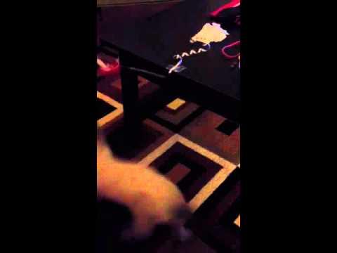 Koa kitten plays at 4 am!