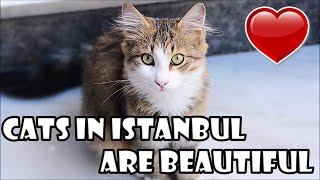 In Istanbul the Cats Are King - Cute Cats