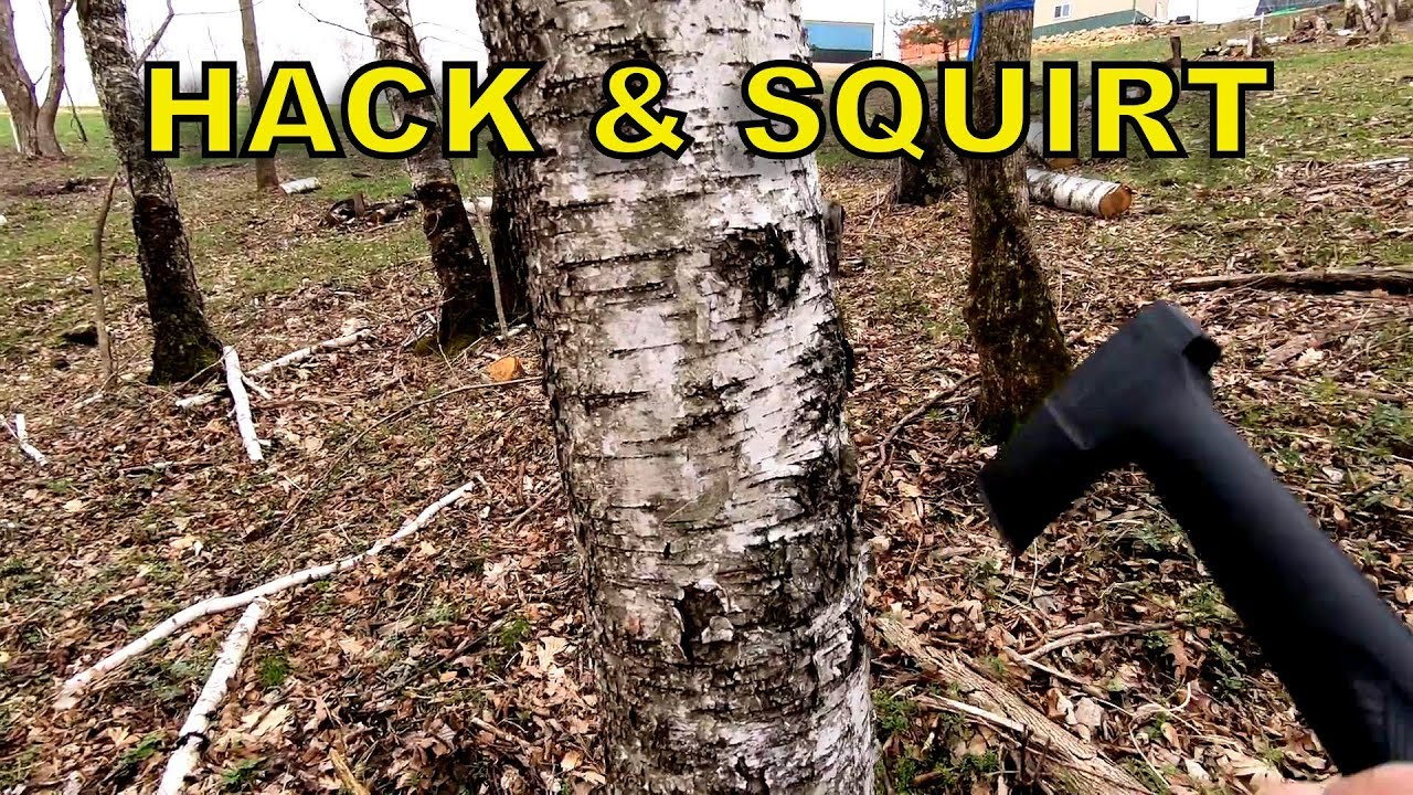 Hack and Squirt Method of Killing Trees Explained