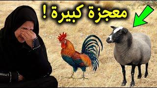 شاهد امرأة فقيرة اشترت ديك بدلاً من خروف عيد الاضحي.. لكن حدث لها معجزة كبيرة جداً !! سبحان الله