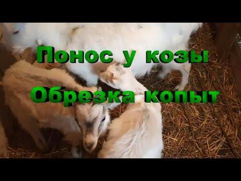 Понос у козы, обрезка копыт