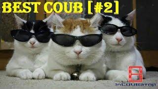 Best Coub [#2] l подборка лучших coub смотреть приколы бесплатно l