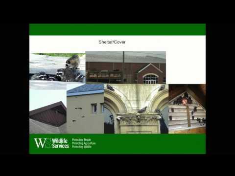 Workshop on living with wildlife in urban settings - June 29, 2016