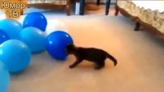 Смешные коты и шарики  Funny cats vs balloons
