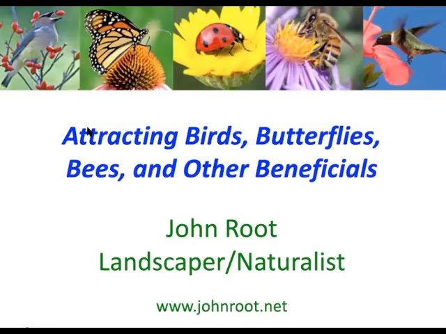 Attracting Birds Butterfly and Bees w John Root