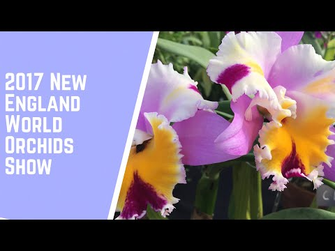 2017 New England World Orchid Show