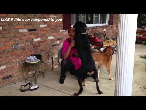 Rottweiler reunited with his owner