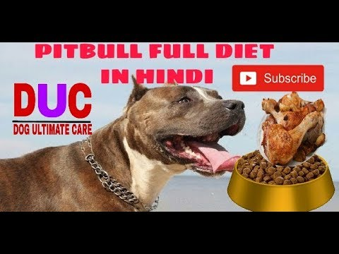 Pitbull Dog (food Plan In Hindi) !! - Dog ultimate care ! !