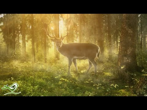 Relaxing Celtic Music: Beautiful Relaxing Music, Sleep Music, Flute Music, Meditation Music ★123