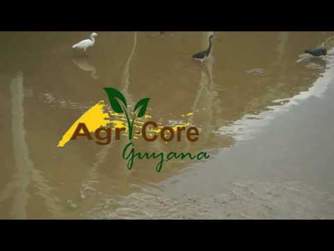 AgriCore Guyana - The fisheries Department Guyana at work